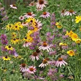 Eastern Pollinator Blend, Wildflower Seed