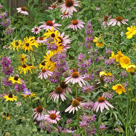 Eastern Pollinator Blend, Wildflower Seed - 1 Ounce image number null