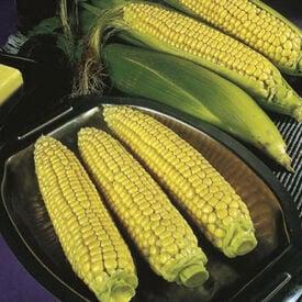 Jubilee, (F1) Corn Seed