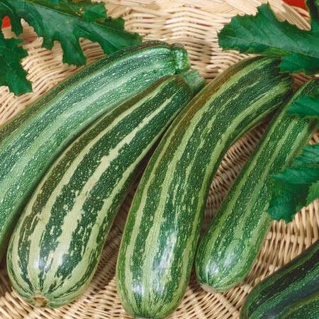 Green Zebra, (F1) Squash Seeds image number null