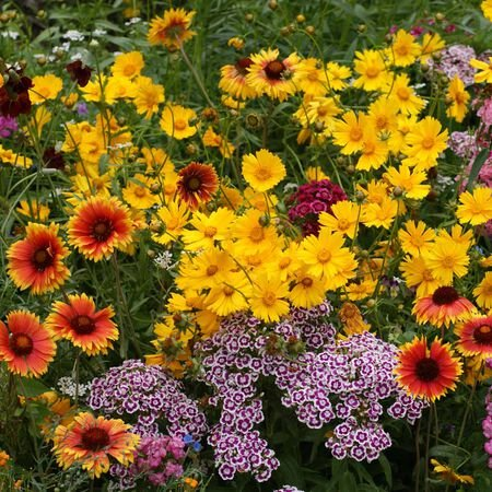Knee High Mix, Wildflower Seed - 1 Ounce image number null