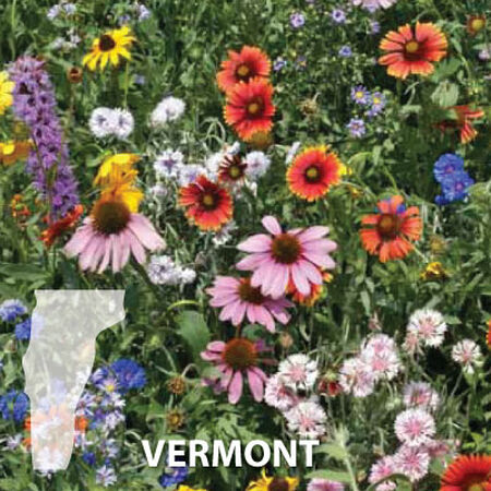 Vermont Blend, Wildflower Seed - 1 Ounce image number null