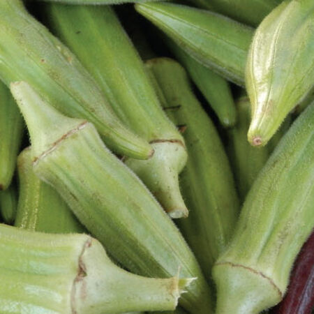 Clemson Spineless 80, Okra Seed - Packet image number null