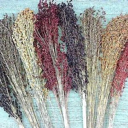 Broom Blend, Corn Seed image number null