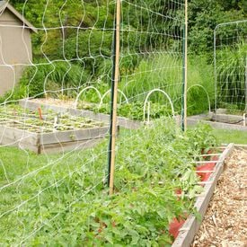 Commercial Trellis Netting, Crop Supports