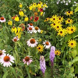 Songbird Blend, Wildflower Seed
