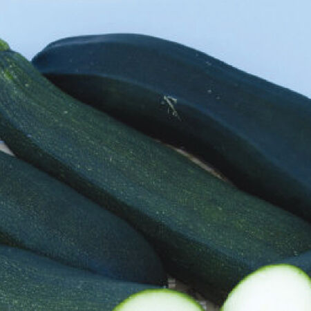 Dark Green, Zucchini Seeds - Packet image number null
