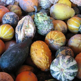 Small Mix, Gourd Seeds
