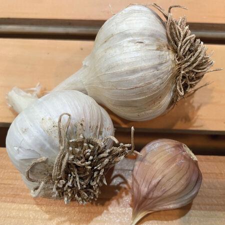 Leningrad, Garlic Bulbs image number null