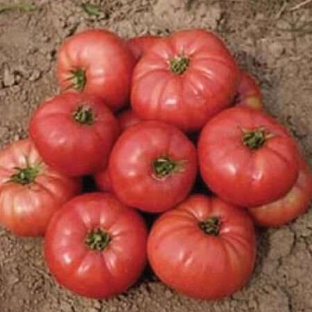 Ponderosa Pink, Tomato Seeds - Packet image number null