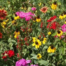 Southeast Native Blend, Wildflower Seed