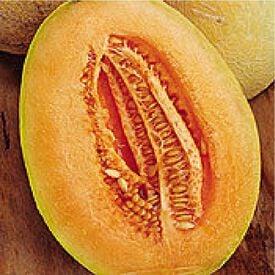 Honey Dew Stutz Supreme, Organic Melon Seeds