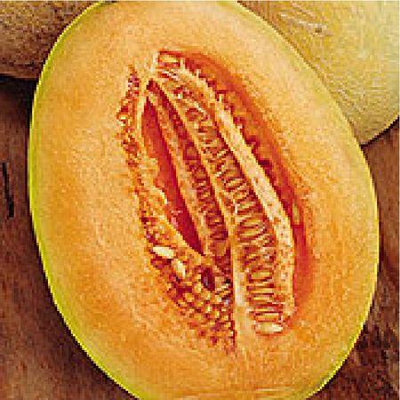 Honey Dew Stutz Supreme, Organic Melon Seeds - Packet image number null