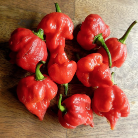 Pepper X Ville, Pepper Seeds