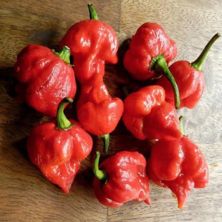 Pepper X Ville, Pepper Seeds image number null