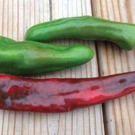 Anaheim Chili, Pepper Seeds