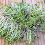 Kale, Sprout Seeds - 1/4 Pound thumbnail number null