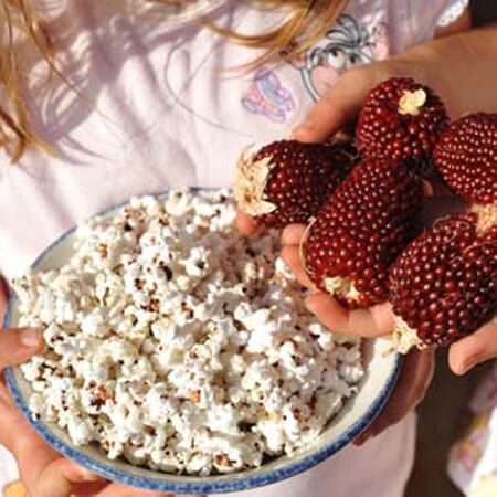 Strawberry Popcorn, Corn Seed - Packet (1 oz.) image number null