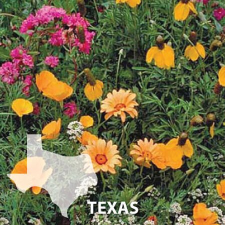 Texas Blend, Wildflower Seed - 1 Ounce image number null
