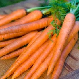 Danver 126, Organic Carrot Seeds
