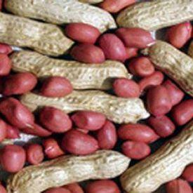 Tennessee Red Valencia, Peanut Seeds