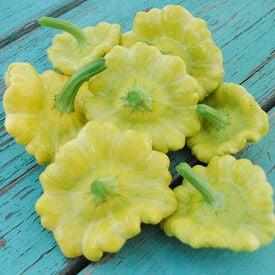 Gelber Englischer, Squash Seeds