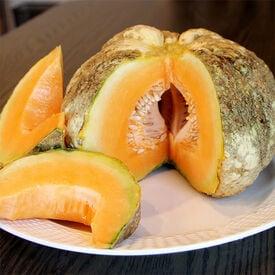 Prescott Fond Blanc, Melon Seeds