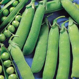 Wando, Pea Seeds