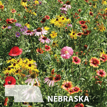 Nebraska Blend, Wildflower Seed - 1 Ounce image number null