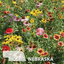 Nebraska Blend, Wildflower Seed - 1 Ounce thumbnail number null