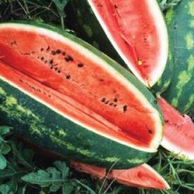Congo, Watermelon Seeds