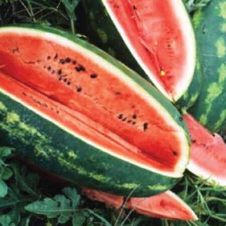 Congo, Watermelon Seeds - Packet image number null