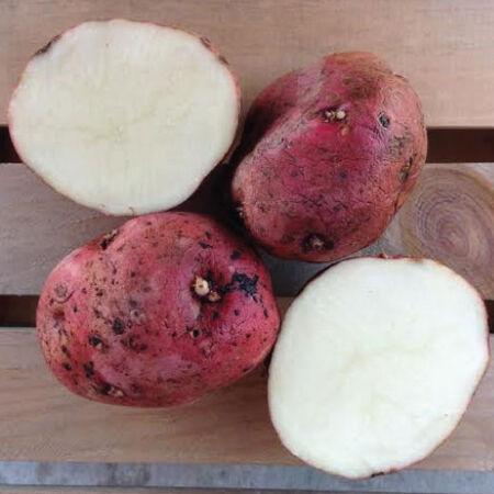 La Soda, Seed Potatoes image number null
