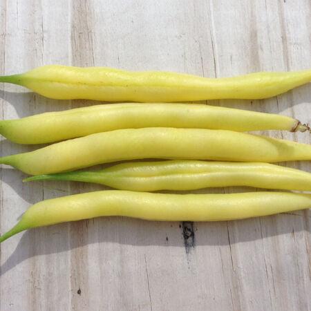 Slenderwax, Bean Seeds image number null