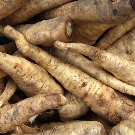 Czechoslovokian, Horseradish image number null