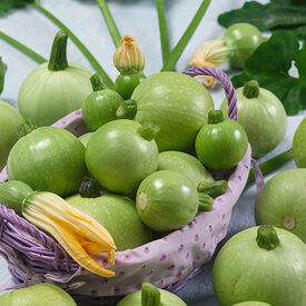 Ronde De Nice, Organic Zucchini Seeds
