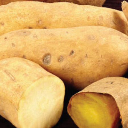 White Yam, Sweet Potato Slips - 25 Potato Slips image number null