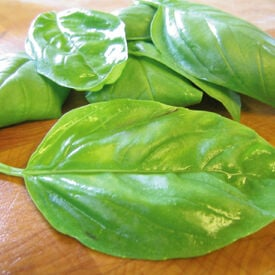 Large Leaf Italian, Basil Seeds