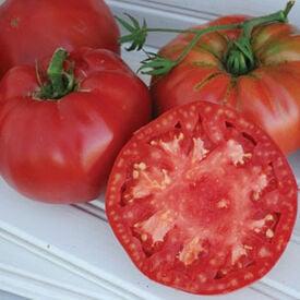 Pruden's Purple, Organic Tomato Seeds