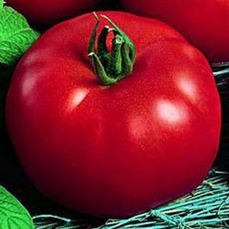 Siberian, Tomato Seeds - Packet image number null