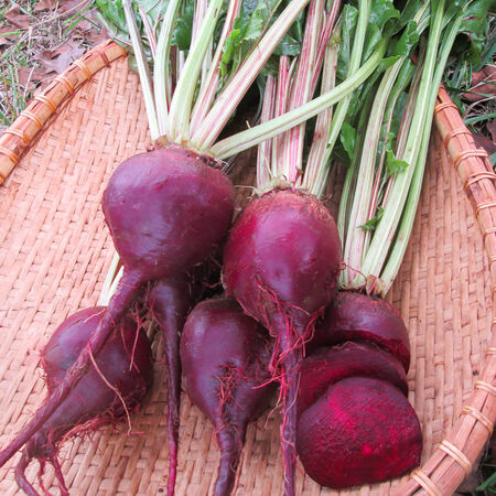 Lutz Green Leaf White Stem, Beet Seeds - Packet image number null