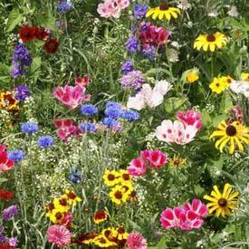 Bird and Butterfly Blend, Wildflower Seed