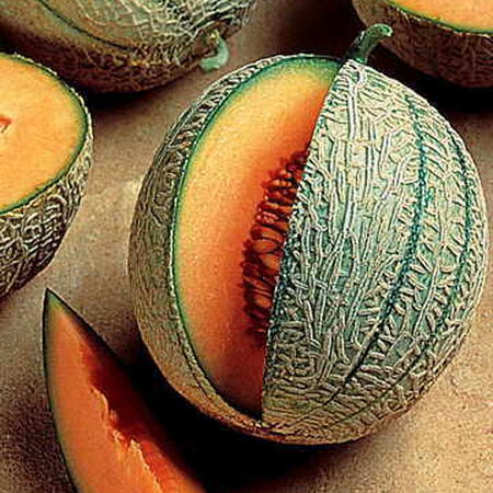 Ambrosia, (F1) Melon Seeds image number null