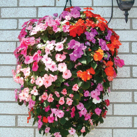 Hanging Flower Pouch, Containers - 100 Bags image number null