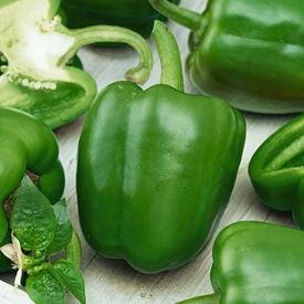 Emerald Giant, Organic Pepper Seeds