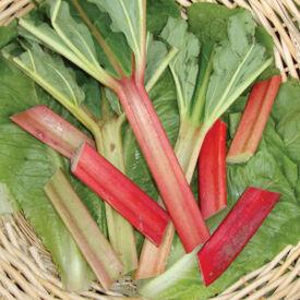 Victoria, Rhubarb Seed