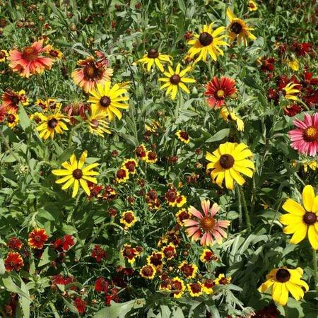 Short Prairie Blend, Wildflower Seed - 1 Ounce image number null