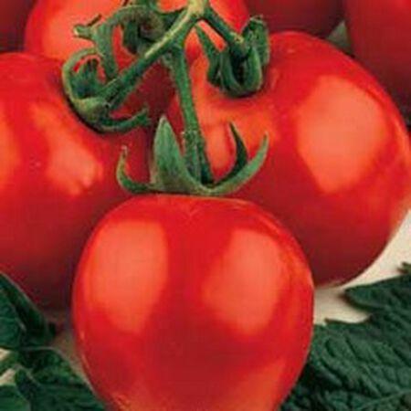 Sub Arctic Plenty, Tomato Seeds - Packet image number null