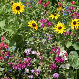 Moist Soil Blend, Wildflower Seeds
