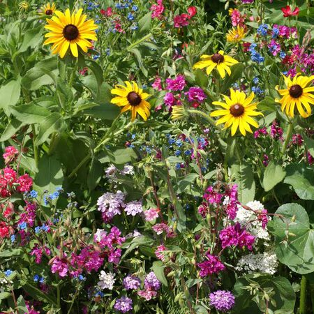 Moist Soil Blend, Wildflower Seeds - 1 Ounce image number null